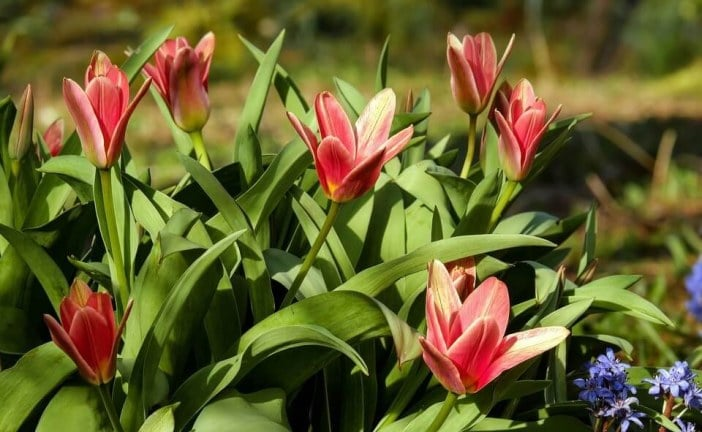 В община Добрич зелените пространства са обогатени с нови близо 4400 дръвчета, храсти и цветя
