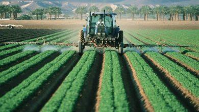 Photo of Международен ден за борба с пестицидите